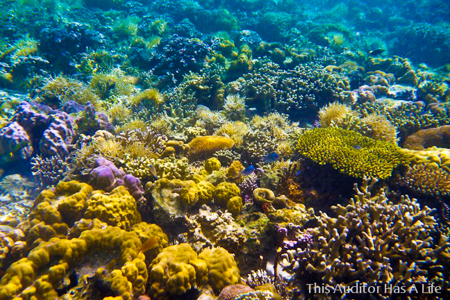 Photo Credit: http://iyabelles.blogspot.com/2012/08/snorkelling-at-twin-peaks-reef.html